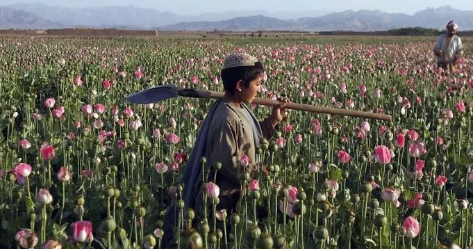 联合国报告显示 全球非法药品产量创历史新高!