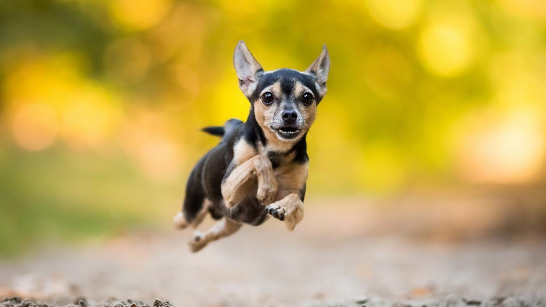 保护宠物膝关节