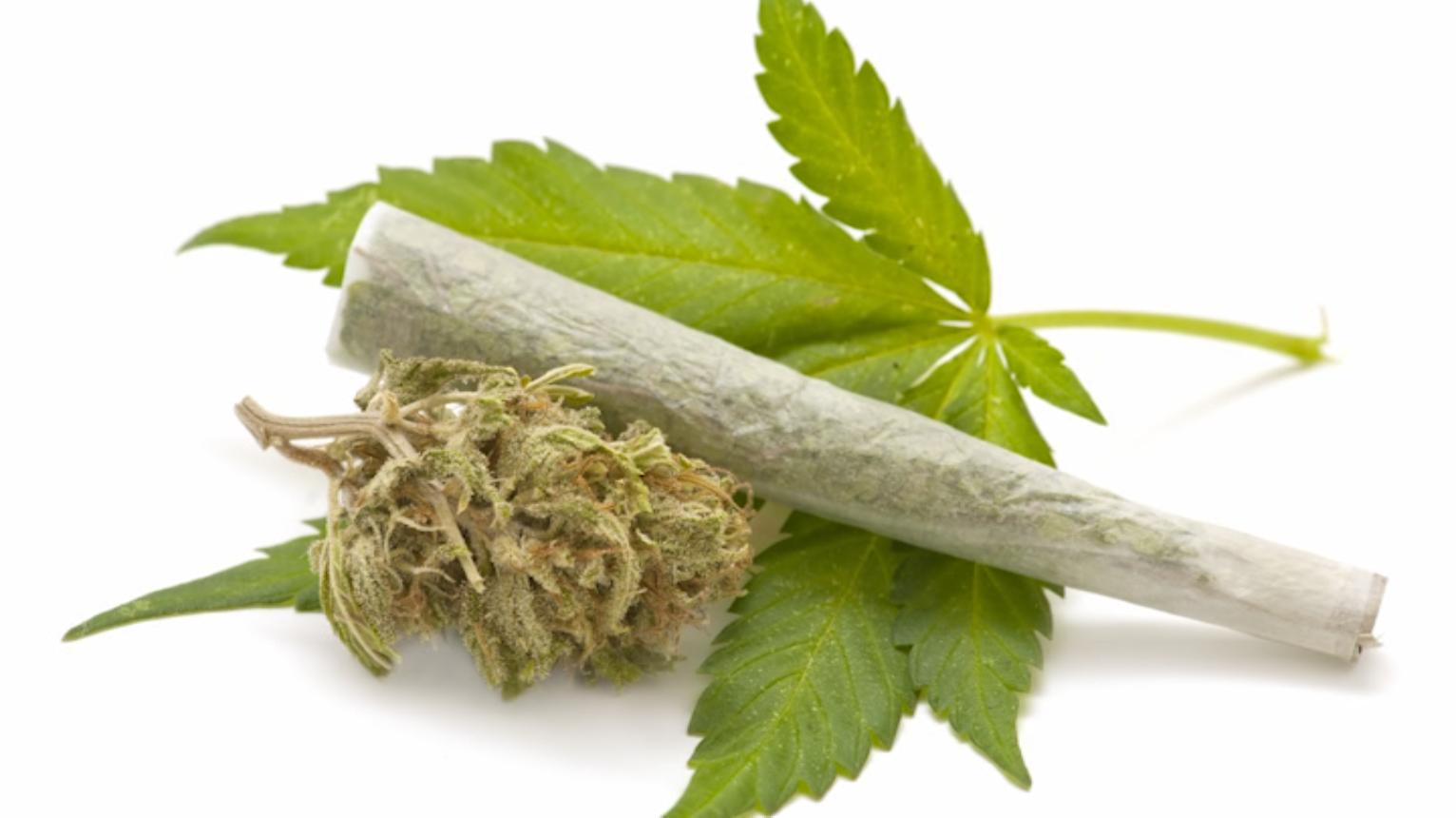 如何合法进入大麻产业