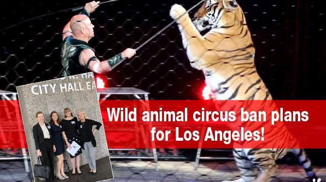 洛杉矶新禁令,禁止野生或外来动物用于娱乐目的