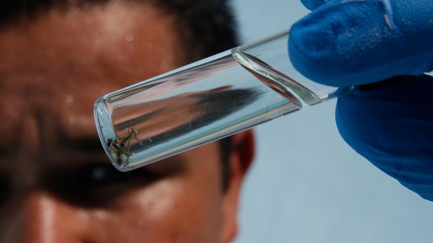 橙县今年蚊子数量约去年的5倍,专家称须提防西尼罗病毒