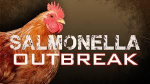 全美48个州爆发沙门氏菌,900多人感染,或与后院家禽有关