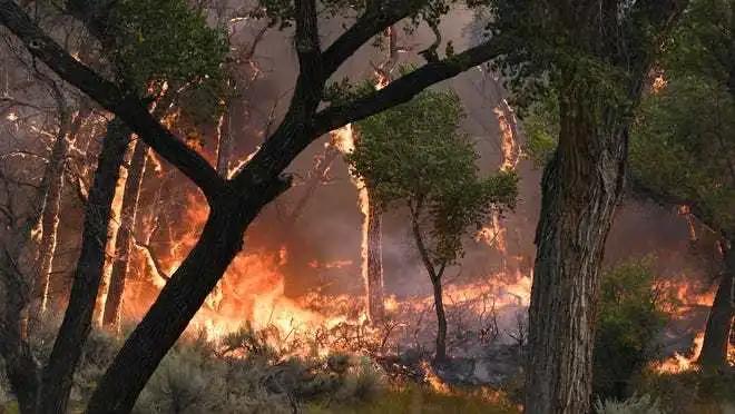 西海岸火势更新:山猫大火摧毁房屋及洛杉矶著名自然中心;俄勒冈州6人被指控纵火