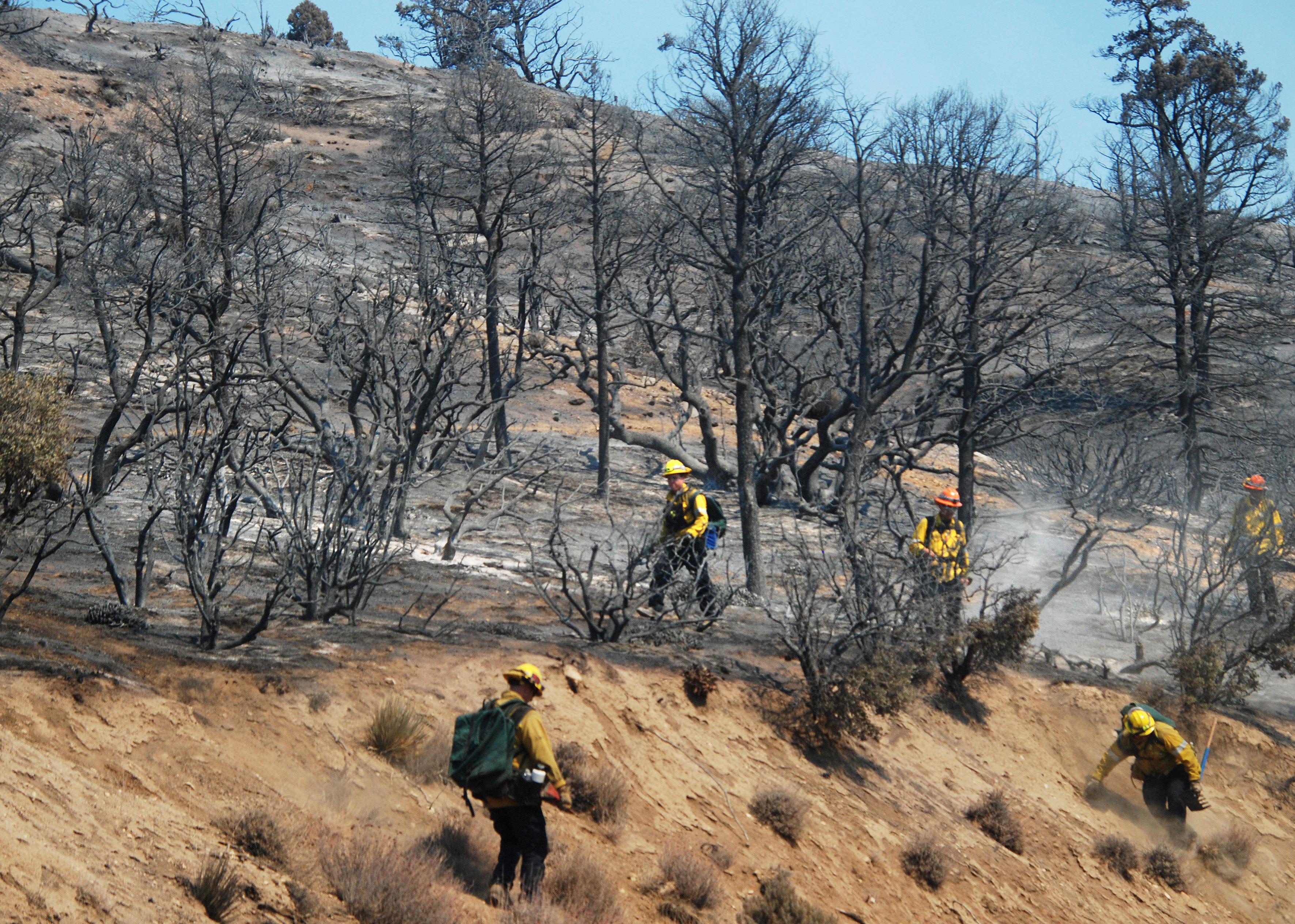 山猫野火导致圣盖博野生动物保护区出现泥石流隐患