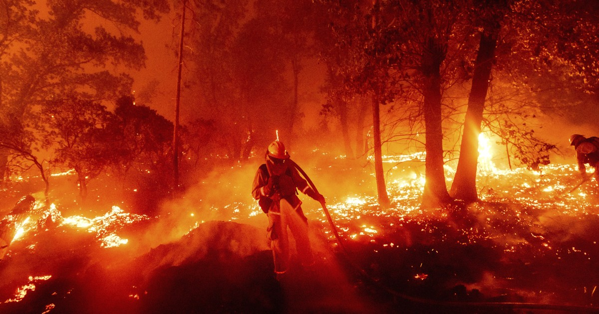 南加州山火烧毁面积占洛杉矶国家森林总面积23%