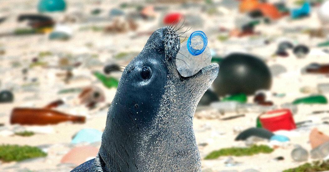 美国海岸线塑料污染自影响数千只海洋哺乳动物