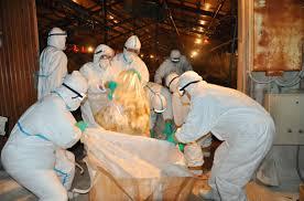 日本宫崎县养鸡场86只鸡因禽流感死亡