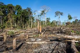 亚马逊雨林去年滥伐面积高达17%