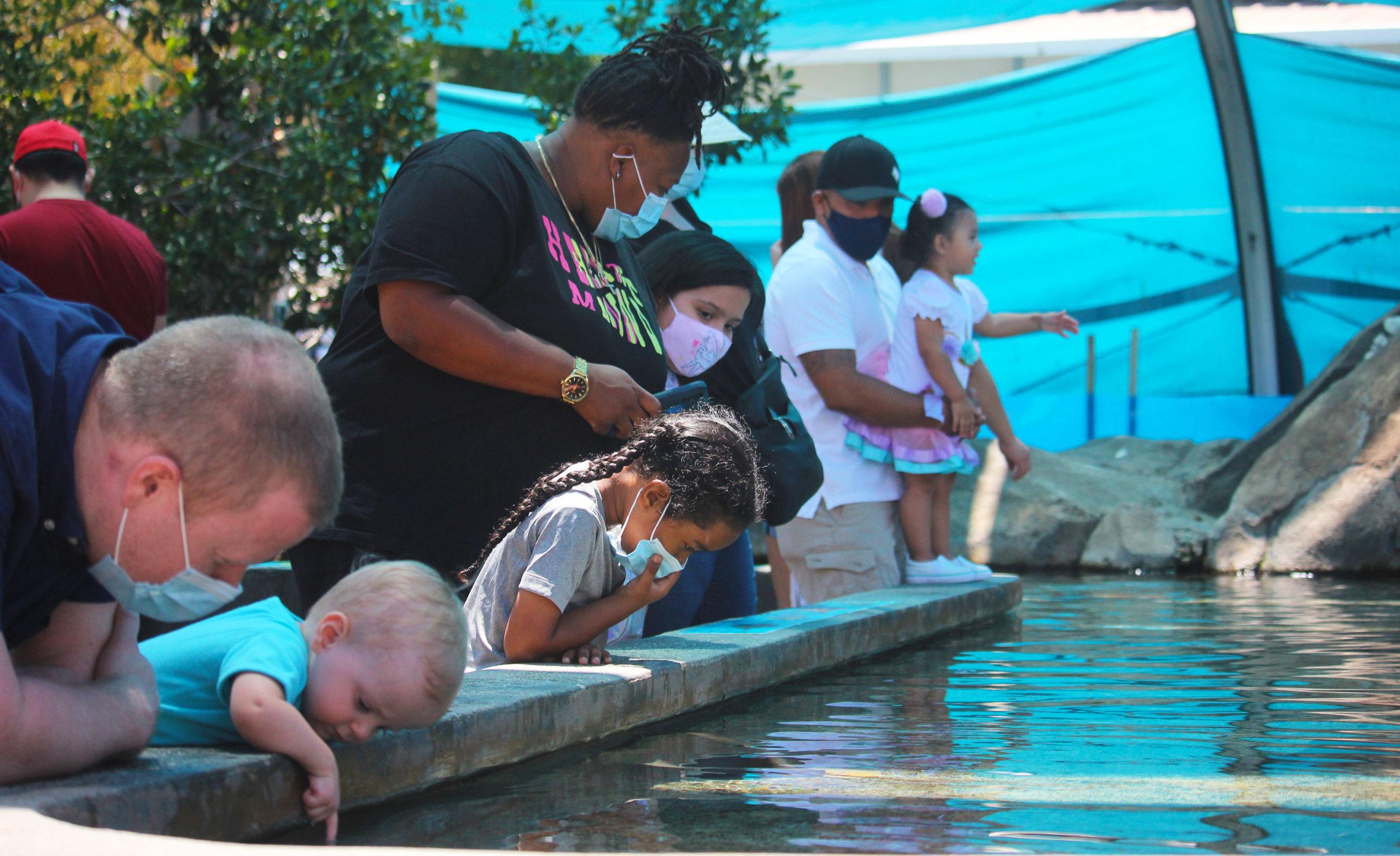 长滩市为鼓励民众接种新冠疫苗赠送水族馆门票