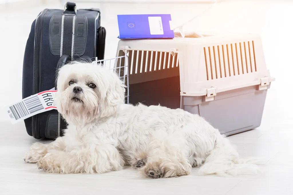 带狗赴美有新规!CDC禁止从狂犬病高危国家进口犬只