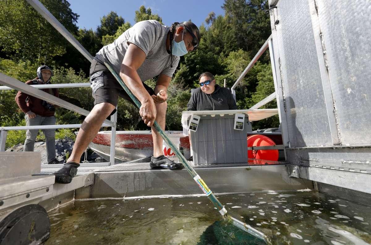 北加州三文鱼产业面临干旱致命性打击