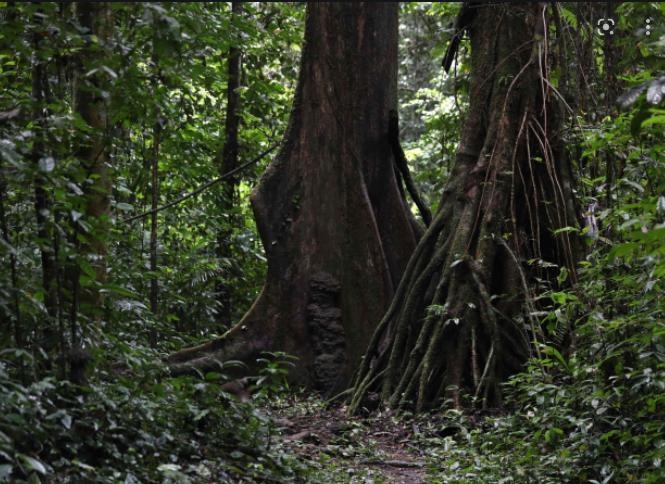 "UNESCO今天在""世界生物圈保护区网络""中新增20个地点"