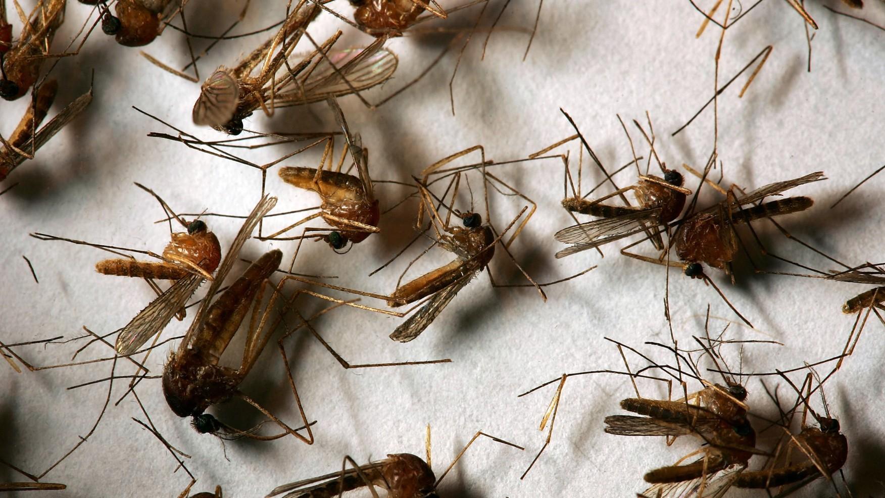 洛杉矶县确认了 2021 年第一例西尼罗河病毒死亡病例