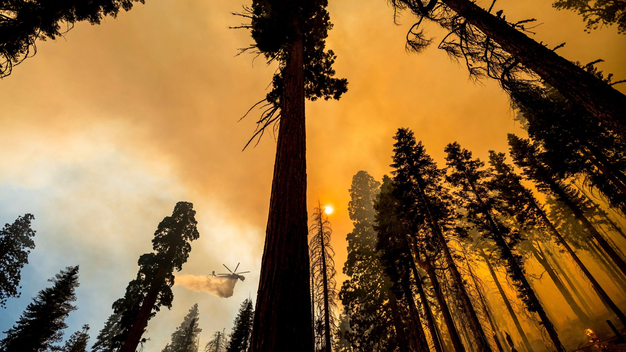 加州中部红杉国家公园爆发新的山火